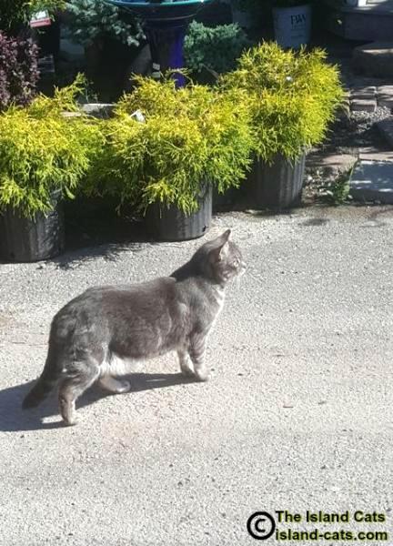 Cat at garden center