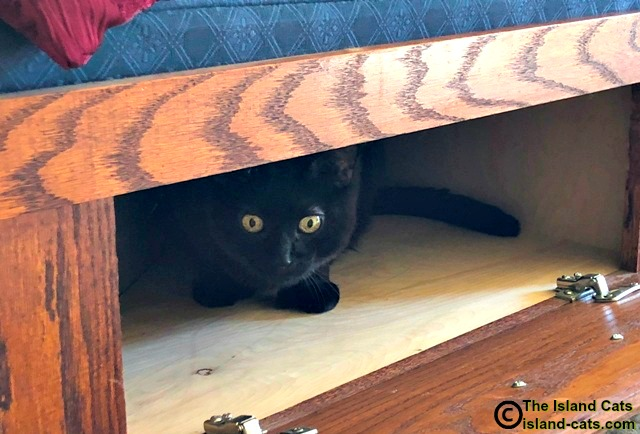Cat hiding in cubby hole