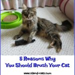 5 Reasons Why You Should Brush Your Cat