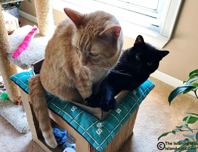 Two cats sitting in a small box