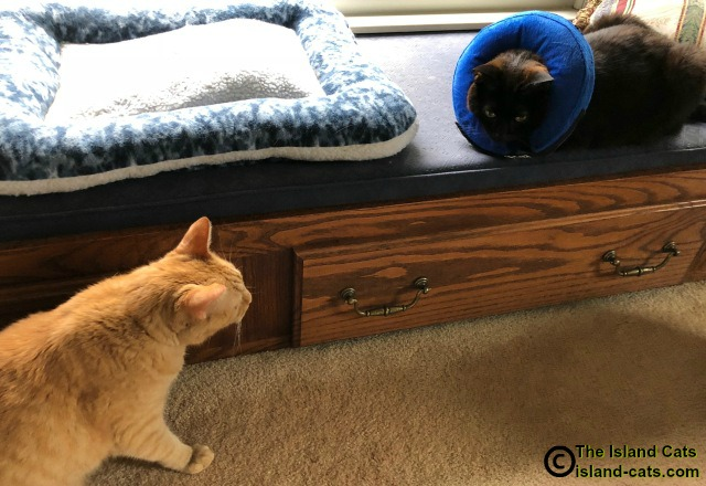 Two cats talking to one another