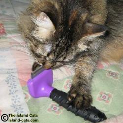 Cat with Furminator