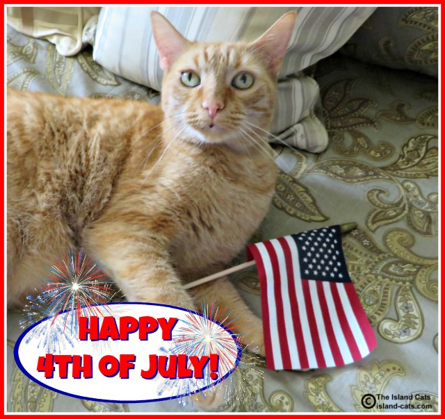 Cat with US Flag