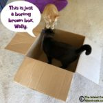Fun and Unique Boxes from Cat in the Box