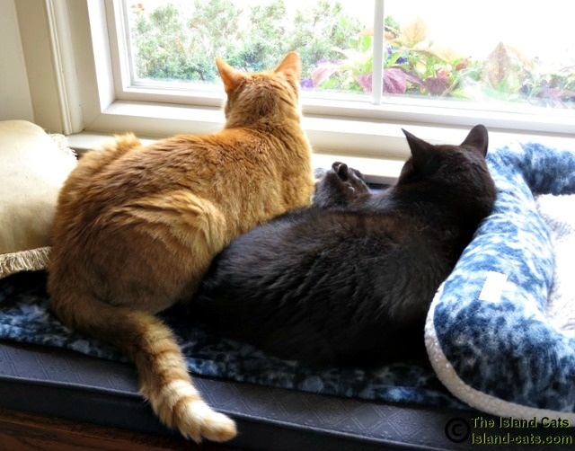 Two cats looking out a window