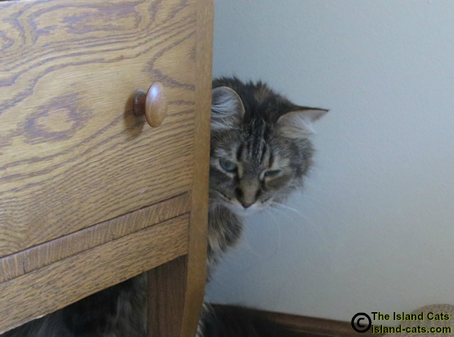 Cat hiding behind drawers