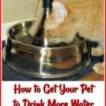 How to Get Your Pet to Drink More Water #ChewyInfluencer