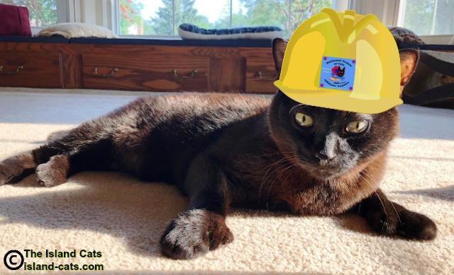 Cat wearing a hard hat