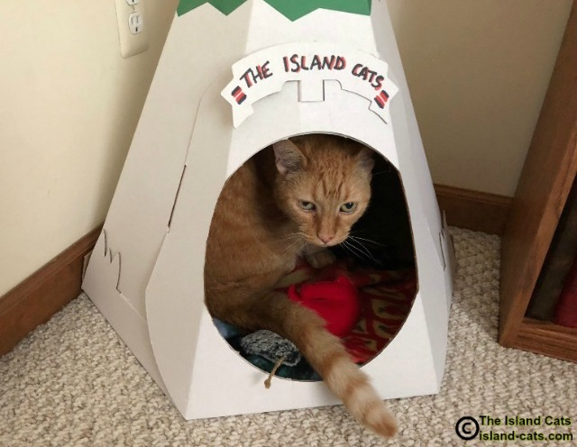 Cat in teepee
