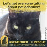 We're Shining a Light on Orphan Pets in Shelters and Rescues #RememberMeThursday
