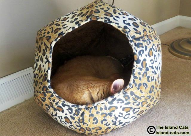 Cat sleeping in cat ball