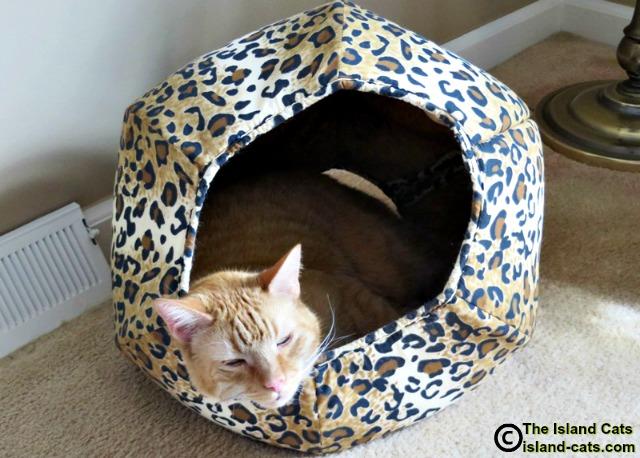 Cat in cat ball