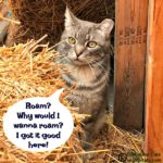 TNR Mythbusting with Chip and Slim, the Garden Center Cats #GlobalCatDay