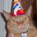 The BESTest Birthday!
