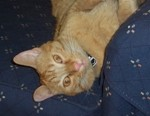 Thursday 13 - Cat Sayings
