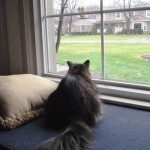 Formerly Feral - Watching TV