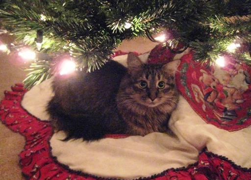 I like napping under the Christmas tree