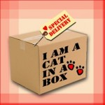 International Box Day!