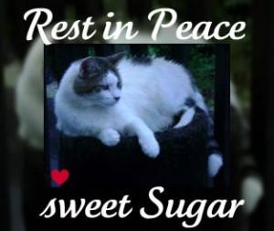 rip-sugar-2009-07-300x253