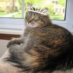 Formerly Feral - I'm a Princess!