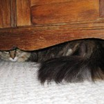 Formerly Feral - Hiding Out!