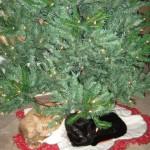 Mancats - Tree Time!