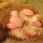 Tabby Toesday!