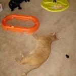 ManCats - Playtime