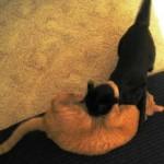 Cat-O-Lympics Breaking News!
