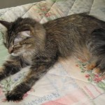 Formerly Feral - Outstretched Paw