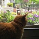Mancats - Planting Flowers