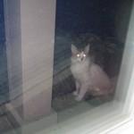 Mancats - Introoder Alert!!