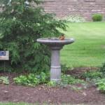 Thursday in Our Garden