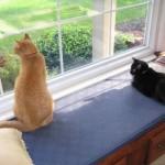 Mancats - Introoder Alert Again!