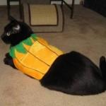 Mancats - We're Not Pumpkins