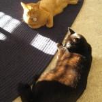Mancats - Hello Sun!