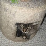 Formerly Feral - Hidey Hole