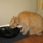 Mancats - New Drinking Fountain!