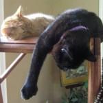 Mancats - Hanging Around