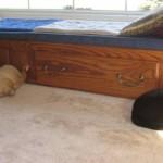 Mancats - Sleeping Styles