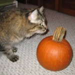Formerly Feral - Pumpkin Head