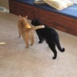 Wrasslin' Mancats