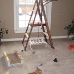 Mancats - The Ladder King