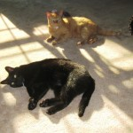 Mancats - Sunpuddle Sharing