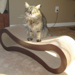 Formerly Feral - On the Scratcher
