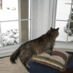 Formerly Feral - Snow!