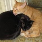 Mancats - I Keep on Tickin'