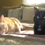 Two on Tuesday - More BlogPaws