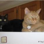 Mancats - Our Prize