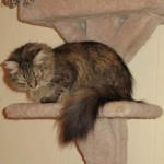 Formerly Feral - Tall Cat Tree